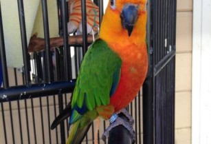 connor parrot (san leandro)