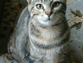 =^..^= 7 month old kitten Tina =^..^= (inner richmond)