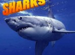(SHARKS) CLOSERS – FRONTERS – $$$$BEST OF THE BEST NEED ONLY APPLY$$$ (los angeles)